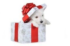 Cucciolo in casella fotografia stock