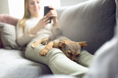 Cucciolo che dorme sui rivestimenti del proprietario immagini stock