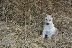 Cucciolo che gioca in una paglia fotografie stock