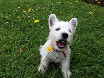 Cucciolo che mangia fiore fotografia stock
