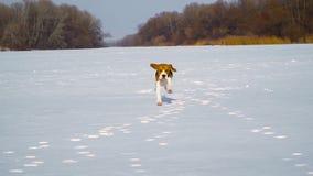 Cucciolo che passa la neve video d archivio