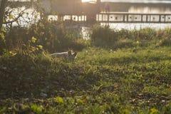 Cucciolo che si nasconde nell'erba coperta di foglie vicino al lago immagini stock libere da diritti