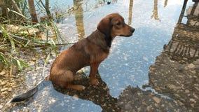 Cucciolo che si siede in acqua fredda immagini stock
