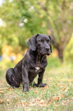 Cucciolo che si siede nell'erba Fotografie Stock
