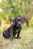 Cucciolo che si siede nell'erba Fotografia Stock