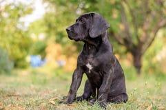Cucciolo che si siede nell'erba Immagini Stock Libere da Diritti