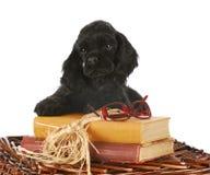 Cucciolo con i libri Fotografia Stock