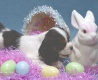 Cucciolo con il coniglietto di pasqua Fotografia Stock Libera da Diritti