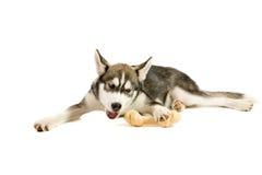 Cucciolo con l'osso Fotografie Stock Libere da Diritti