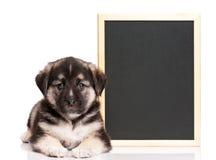 Cucciolo con la lavagna Immagini Stock