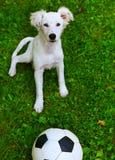 cucciolo con la palla in bianco e nero Fotografia Stock Libera da Diritti