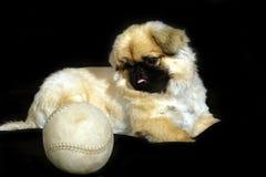 Cucciolo con la sfera fotografia stock
