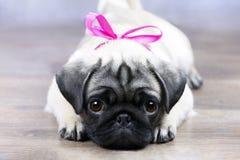Cucciolo con un arco rosa immagine stock