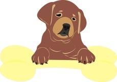 Cucciolo con un osso Fotografia Stock Libera da Diritti