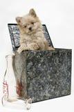 Cucciolo in contenitore di latte Fotografia Stock Libera da Diritti