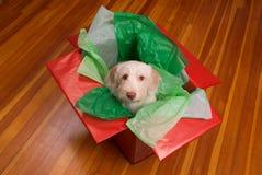 Cucciolo in contenitore di regalo immagine stock libera da diritti