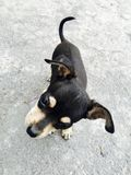 Cucciolo curioso Immagini Stock