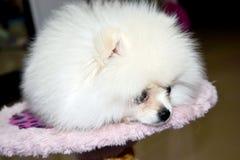 Cucciolo del cane Immagine Stock Libera da Diritti