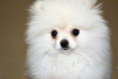 Cucciolo del cane Fotografie Stock