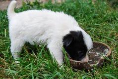 Cucciolo del cane che mangia da una ciotola Fotografia Stock