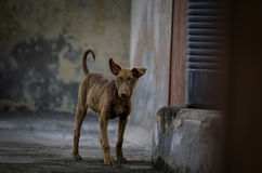 Cucciolo del cane che sta guardante lateralmente Fotografia Stock