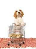 Cucciolo del cane da lepre con il mini carrello di acquisto Fotografia Stock