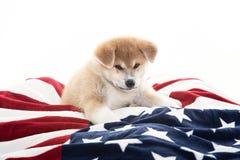 Cucciolo del cane di Akita sopra una coperta Immagine Stock Libera da Diritti