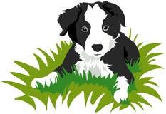Cucciolo del Collie di bordo Fotografia Stock Libera da Diritti