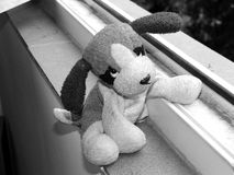 Cucciolo del giocattolo Fotografie Stock Libere da Diritti