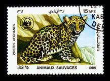 Cucciolo del leopardo (pardus) della panthera, serie del Fondo mondiale per la natura, circa Immagini Stock Libere da Diritti