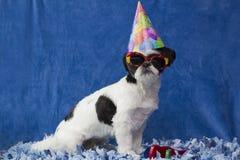 Cucciolo del partito. Immagine Stock