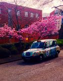 Cucciolo del taxi fotografie stock
