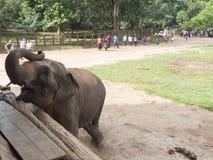 Cucciolo dell'elefante Fotografia Stock Libera da Diritti