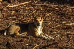 Cucciolo dell'ibrido del cane Immagini Stock
