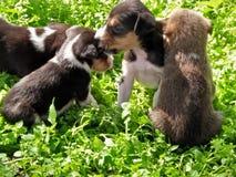 Cucciolo della via di cuteness dei cuccioli Immagine Stock