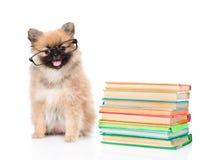 Cucciolo dello Spitz con i vetri ed i libri del mucchio Isolato su bianco Fotografie Stock