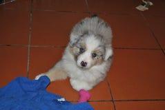 Cucciolo di cane A immagine stock libera da diritti