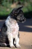 Cucciolo di cane Immagine Stock Libera da Diritti