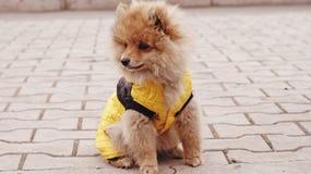 Cucciolo di cane fotografie stock