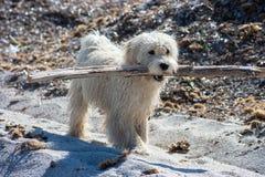 Cucciolo di cane bagnato sulla spiaggia Immagine Stock