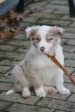 Cucciolo di cane che si siede sul pavimento freddo Fotografie Stock