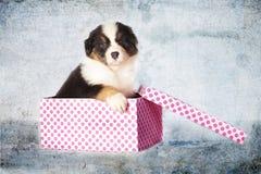 Cucciolo di cane come regalo Fotografia Stock