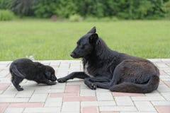 Cucciolo di cane con la madre Immagine Stock