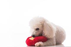 Cucciolo di cane con un cuore rosso Fotografie Stock