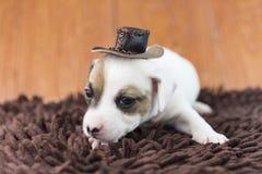 Cucciolo di cane di Jack Russel sul panno e sul cappello Fotografie Stock