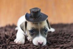 Cucciolo di cane di Jack Russel sul panno e sul cappello Immagine Stock