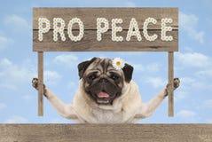 Cucciolo di cane sorridente felice del carlino con pro pace di legno del testo e del segno in fiori bianchi immagine stock libera da diritti