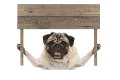 Cucciolo di cane sorridente sveglio del carlino che ostacola il segno in bianco del bordo di legno Fotografie Stock