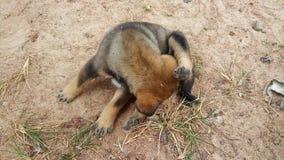 Cucciolo di cane sveglio che si odora all'aperto Immagini Stock