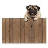 Cucciolo di cane sveglio del carlino che appende con le zampe sul segno promozionale del recinto di legno in bianco Fotografia Stock Libera da Diritti